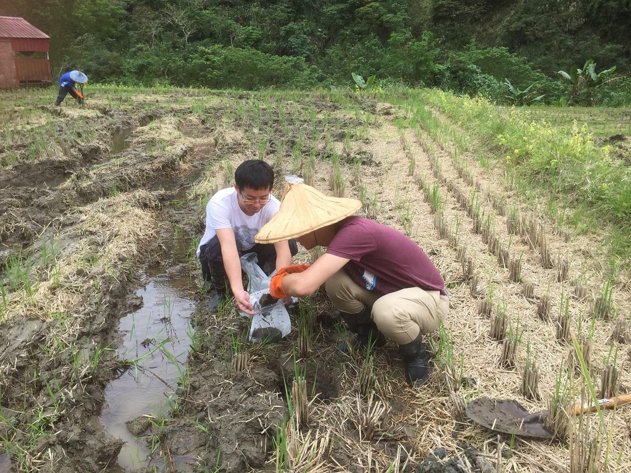 花蓮農改場提供免費土壤健康檢查服務