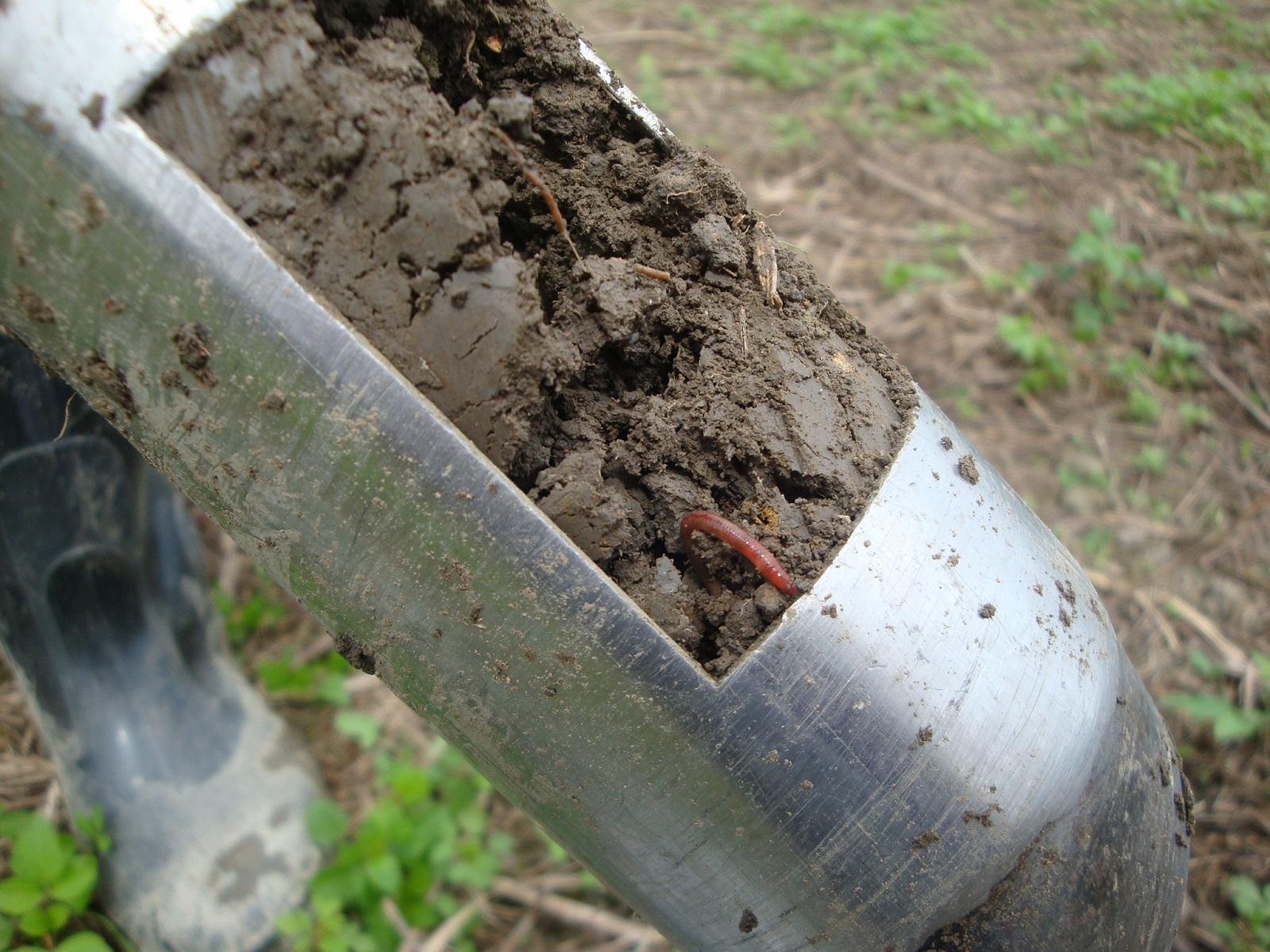 定期進行土壤採樣與分析,可作為全年施肥參考依據