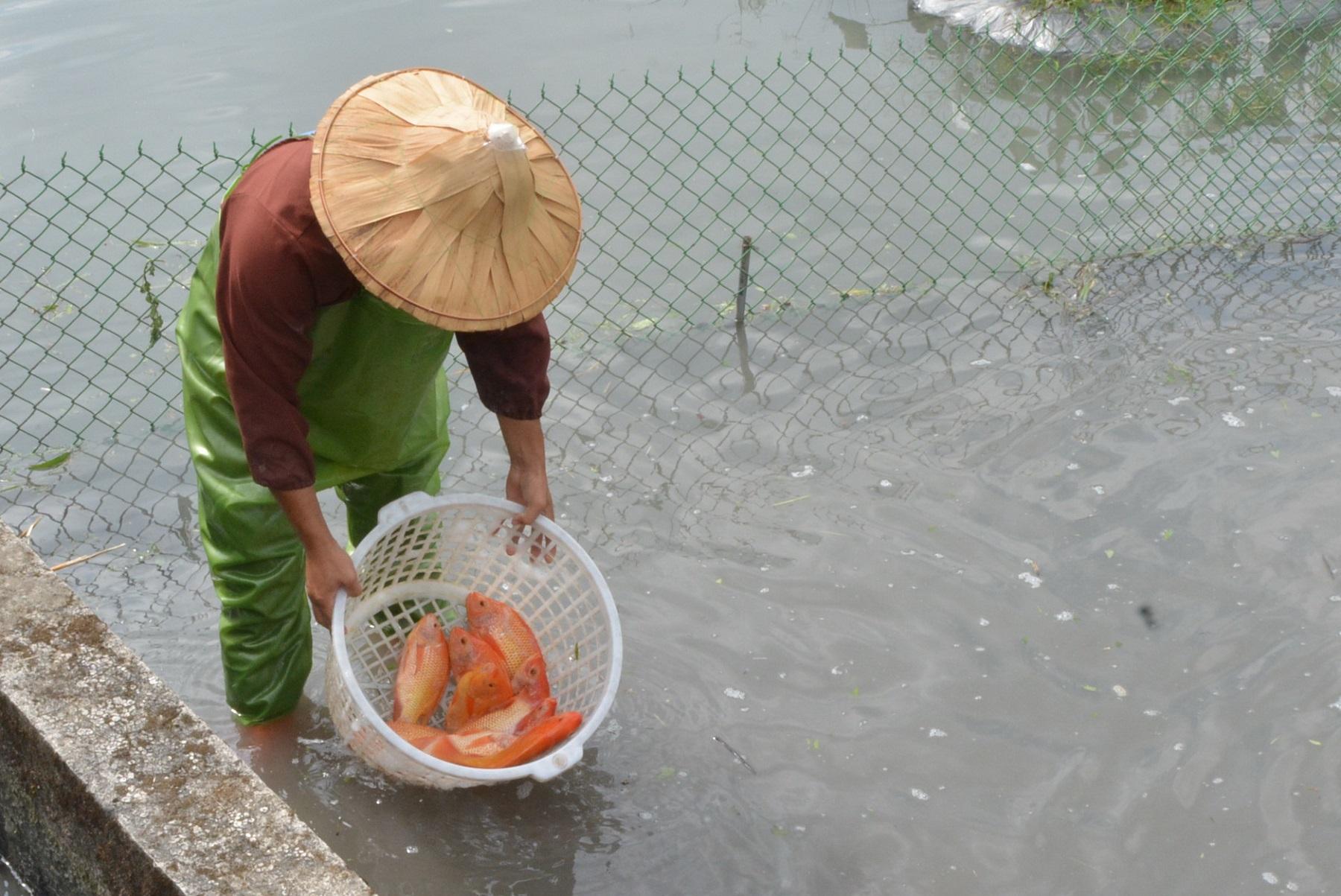 享天然、勁友善,「魚茭共生」農法讓友善耕作更EASY!